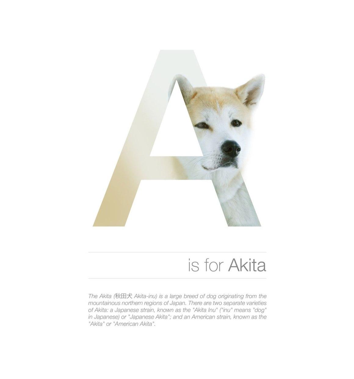 Dog Alphabet A by Andrei Clompos