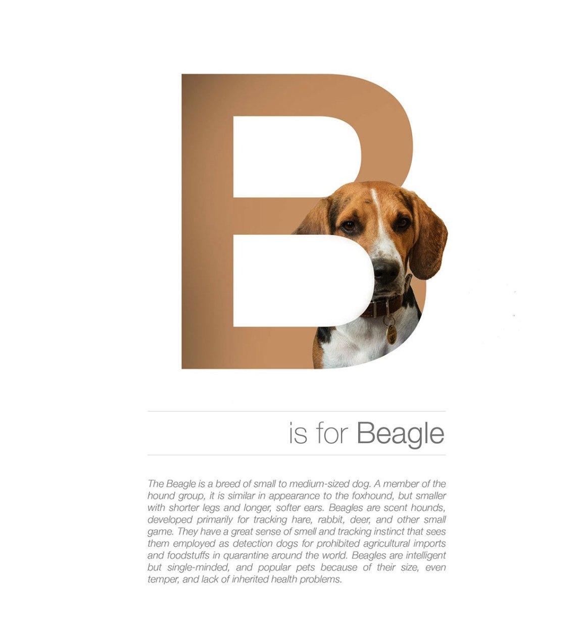 Dog Alphabet B by Andrei Clompos