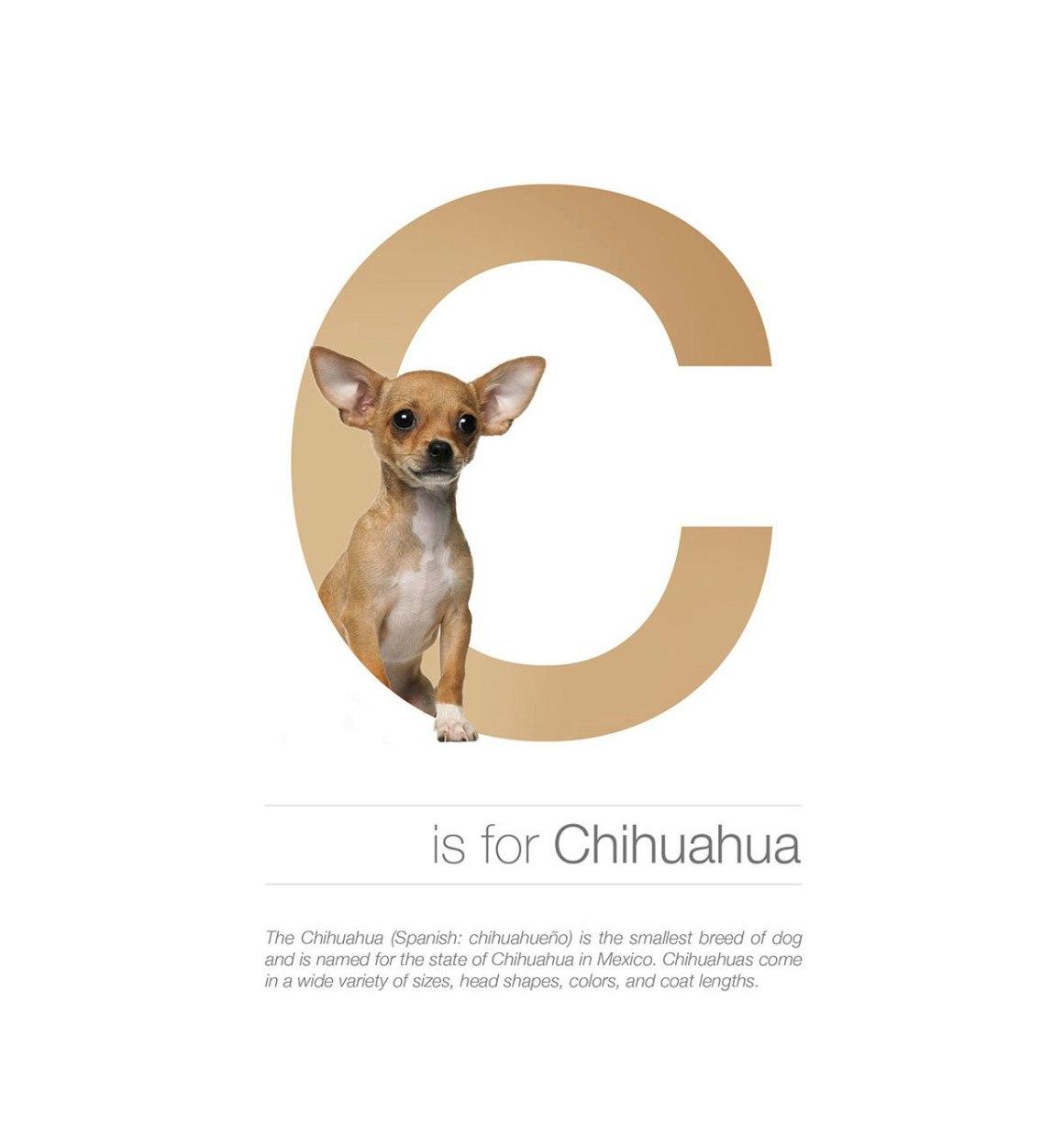 Dog Alphabet C by Andrei Clompos